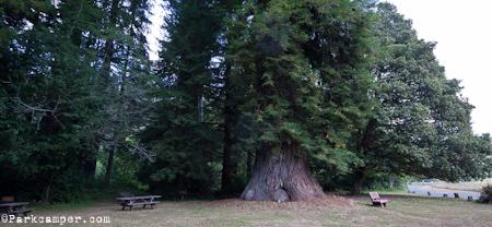 Redwood Elk Prairie Campground