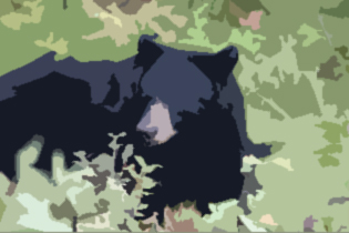 good sized black bear looking back at camera on the edge of gravel road and forest