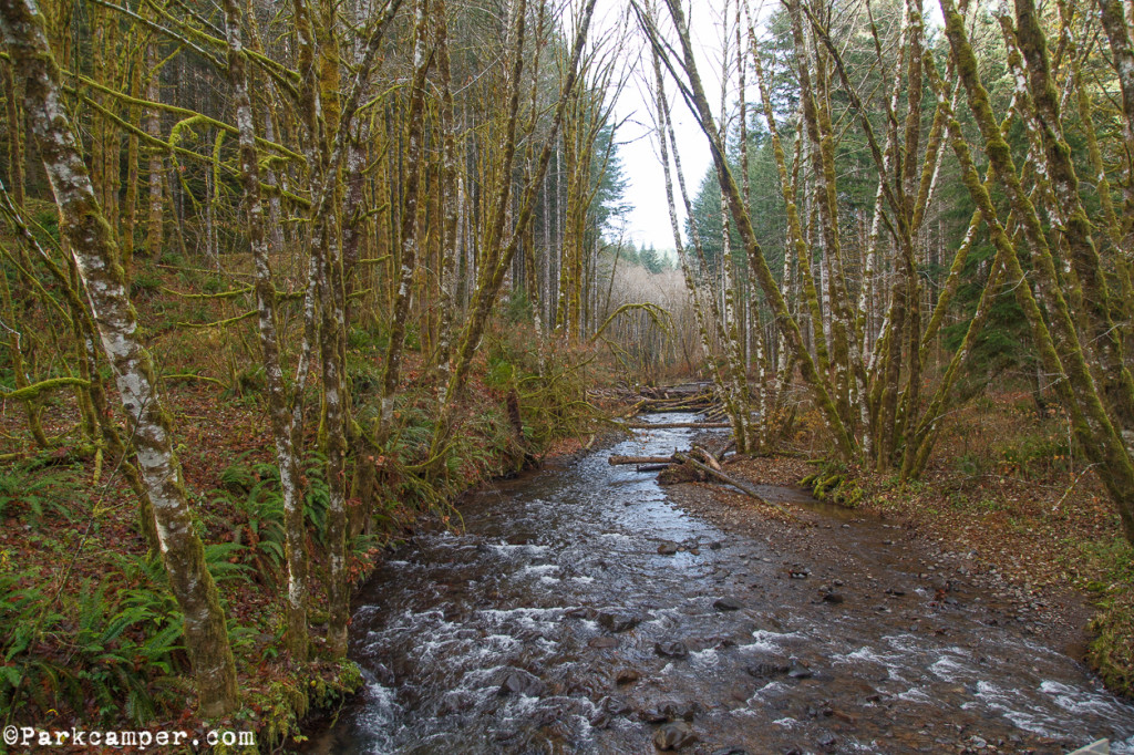 Tillamook-State-Forest