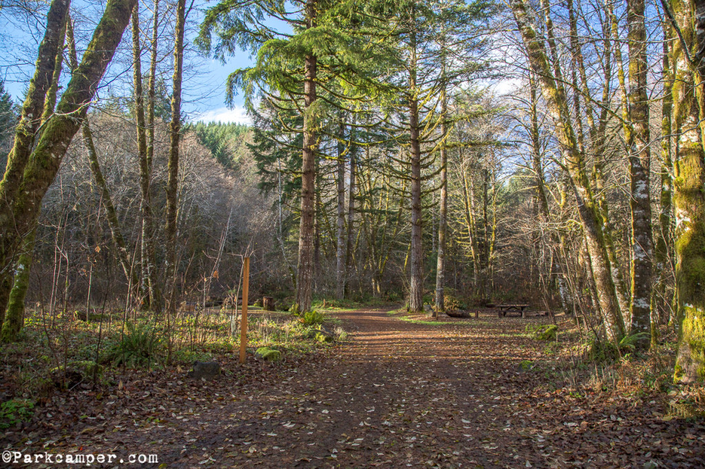Tillamook-State-Forest-Gales-Creek-Campground-loop