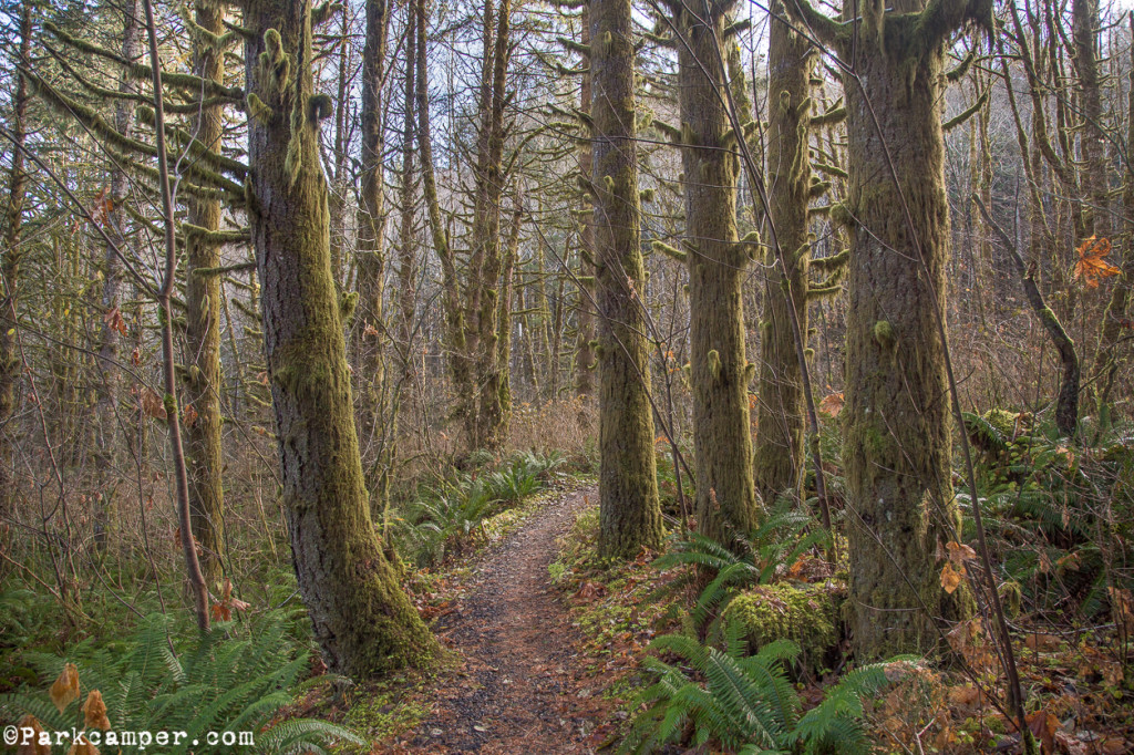Tillamook-State-Forest-peaceful-trail