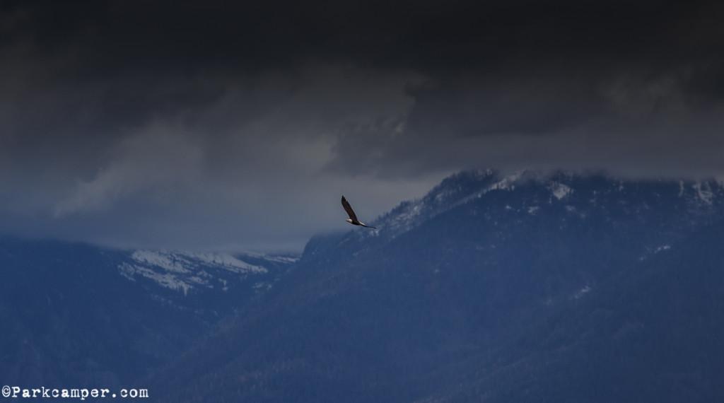 big-sky-bird